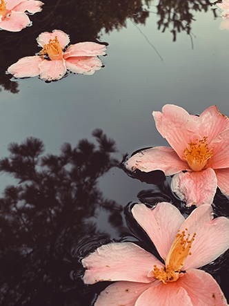 Flowers floating on reflective pond